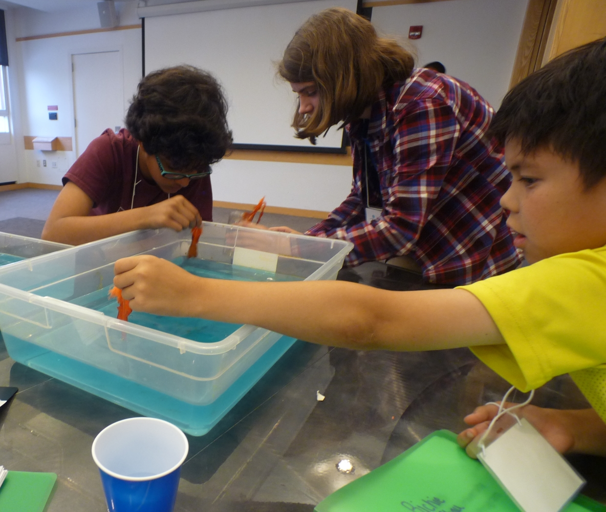 oil spill lab report